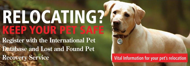 Pets On Board Pet Transport Ireland From Efl Live Animal Transport